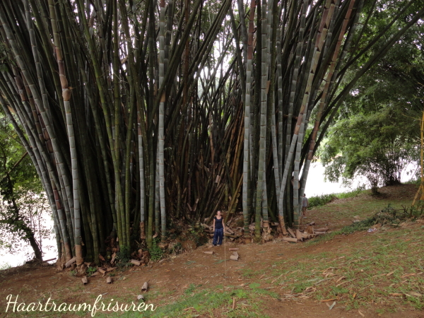 Bambus im botanischen Garten