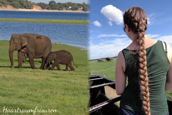 Elefanten <3