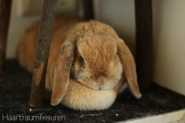 My cute little rabbit
